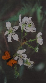 'Blackberry Blossom' - Wendy Fleckner